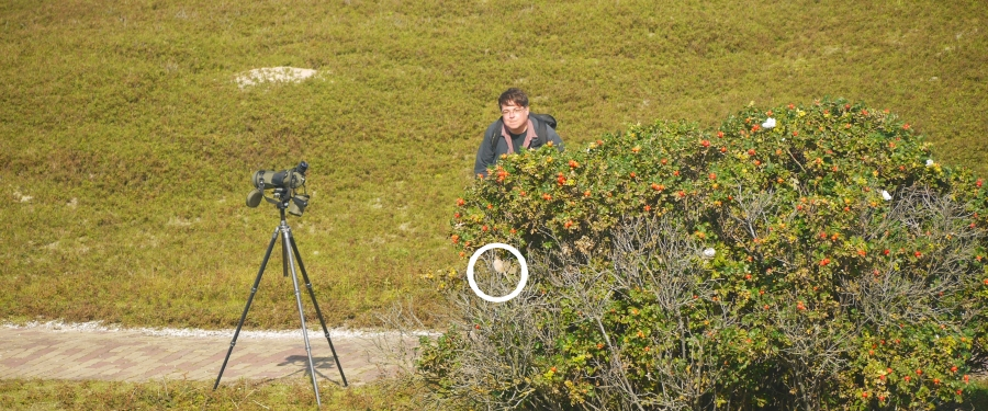Birdwatching guide in the Netherlands Ben Gaxiola