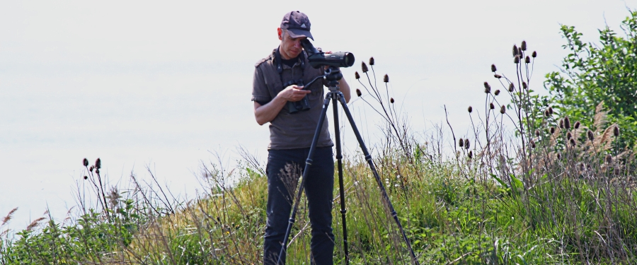 Birdwatching guide in The Netherlands Bertus de Lange